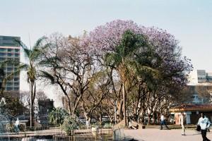 13年4月用ジンバブエ滞在記写真1ハラレの街のジャカランダ
