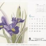 11花カレ6月